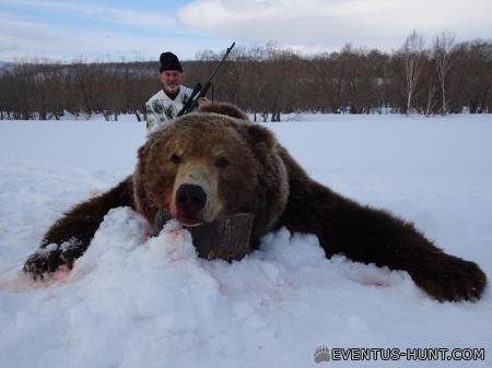 Бурый медведь. Камчатка