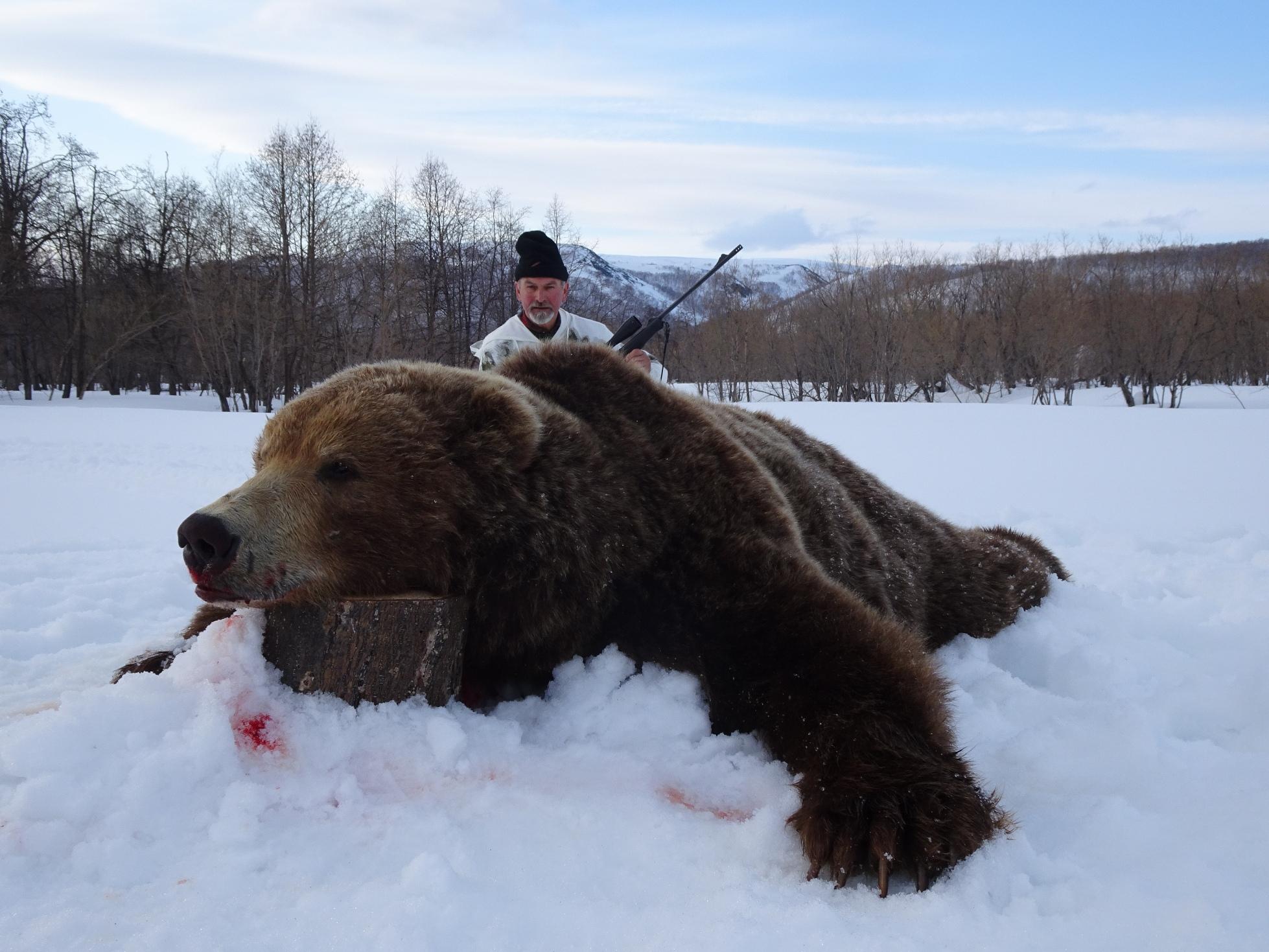 Kamchatka Browm Bear