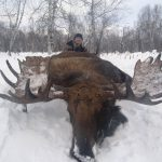 Kamchatka Moose