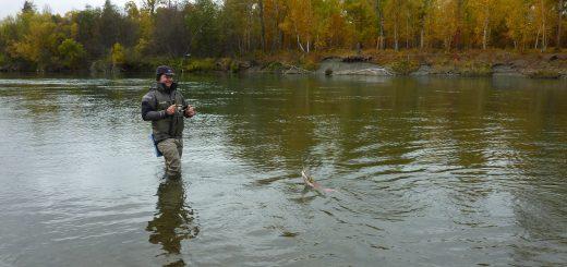 Angeln auf dem Kamtschatka Fluss
